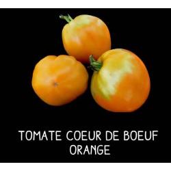 Tomate cœur de bœuf orange