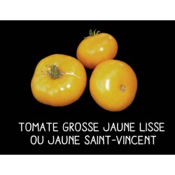 Tomate grosse jaune lisse...