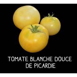 Tomate blanche douce de...