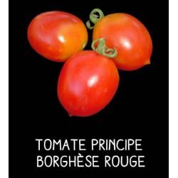 Tomate Principe Borghèse rouge