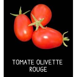 Tomate olivette rouge