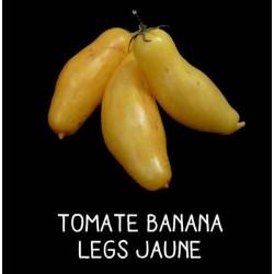 Tomate banana legs jaune