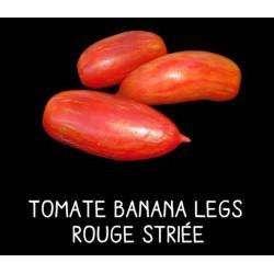 Tomate banana legs rouge...