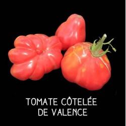 Tomate rose côtelée de Valence