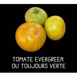 Tomate evergreen ou...