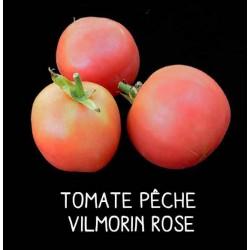 Tomate pêche Vilmorin rose
