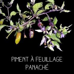 Piment à feuillage panaché
